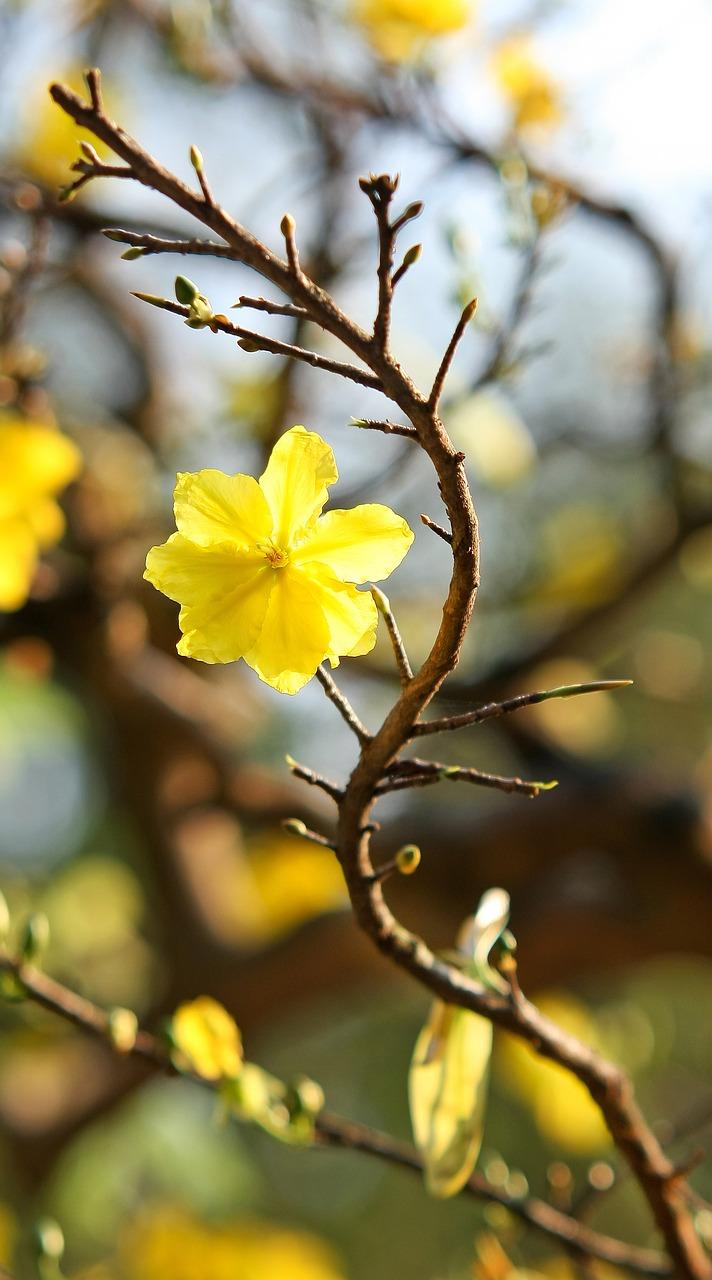 Anmeldung Kurse Qigong Taiji Lotusblüte