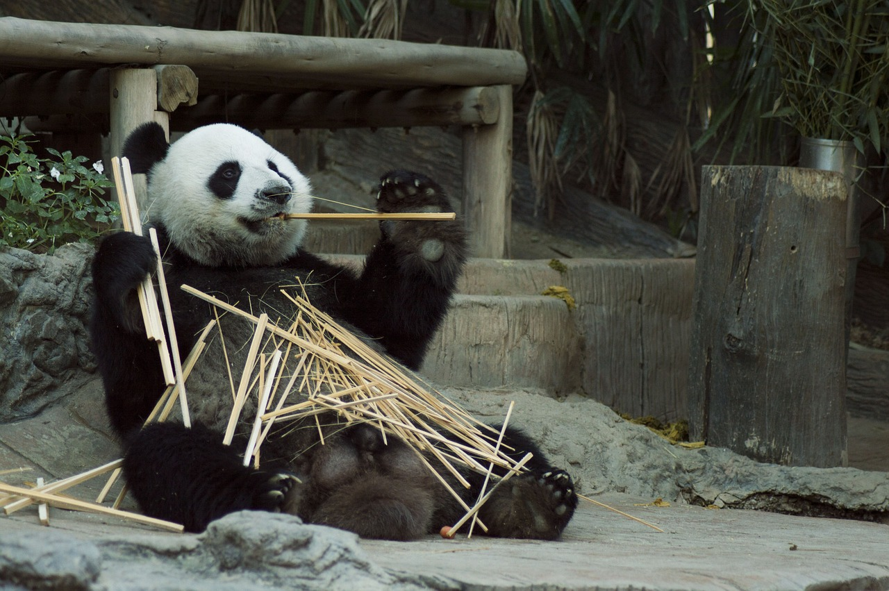 Panda chillen entspannen Kursangebote
